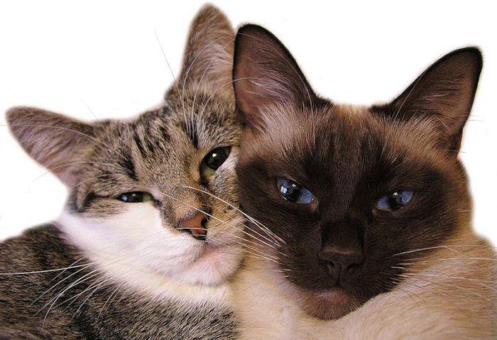 Как передается бешенство от кота