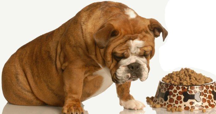 Собака отказывается от сухого корма. Что делать?