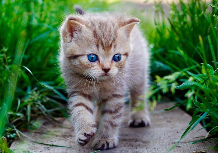 Почему кошка икает