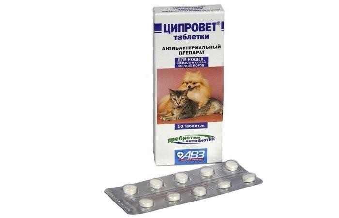 Ципровет для кошек: инструкция по применению, таблетки и капли для глаз, отзывы, аналоги