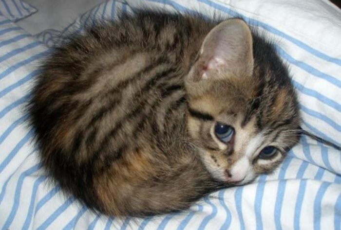 Кот икает что делать — икота у кошки причины