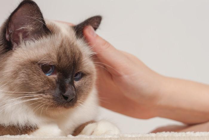 Отит воспаление уха у кошек и котов